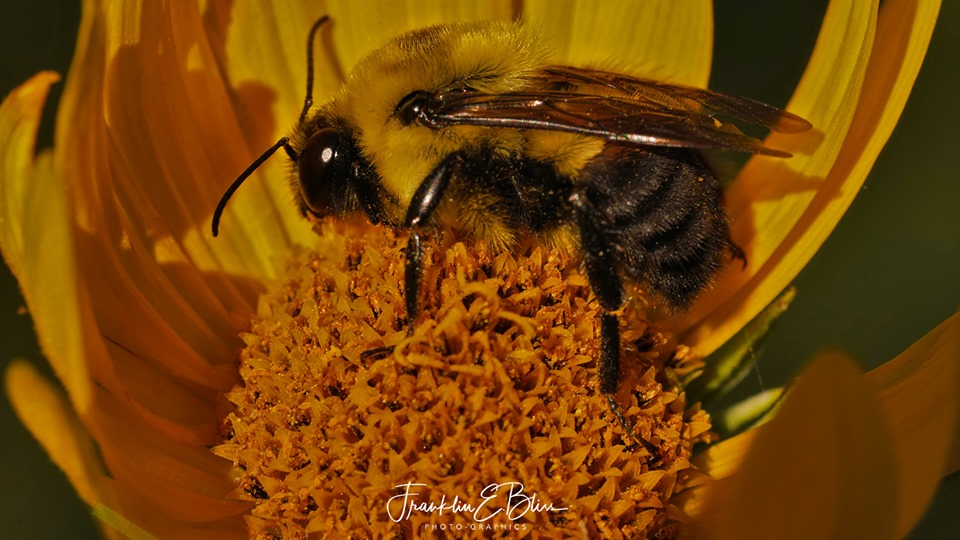 Totally In Focus Bee
