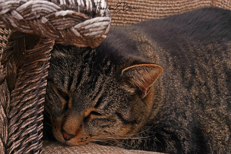 Ranch Cat Nap