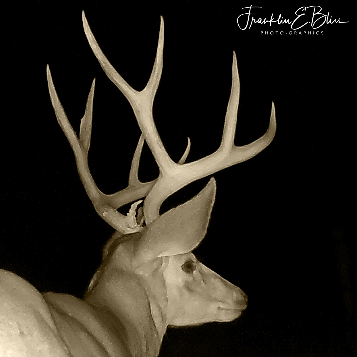 Big Buck in Pitch Black From a Trail Camera (Infra-red)