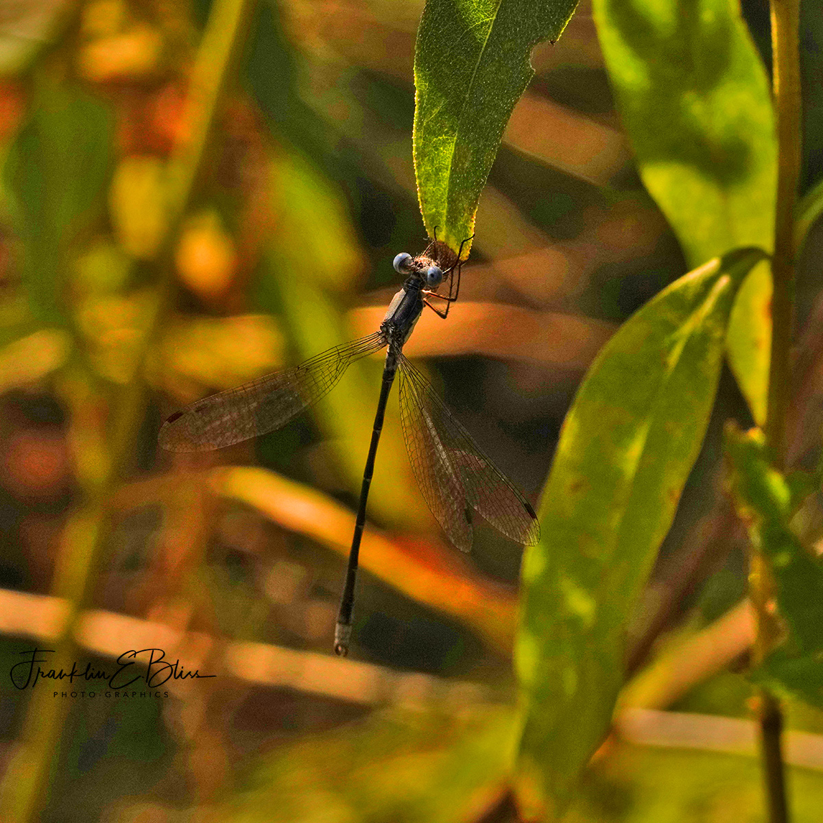 DragonFly Landing Strip