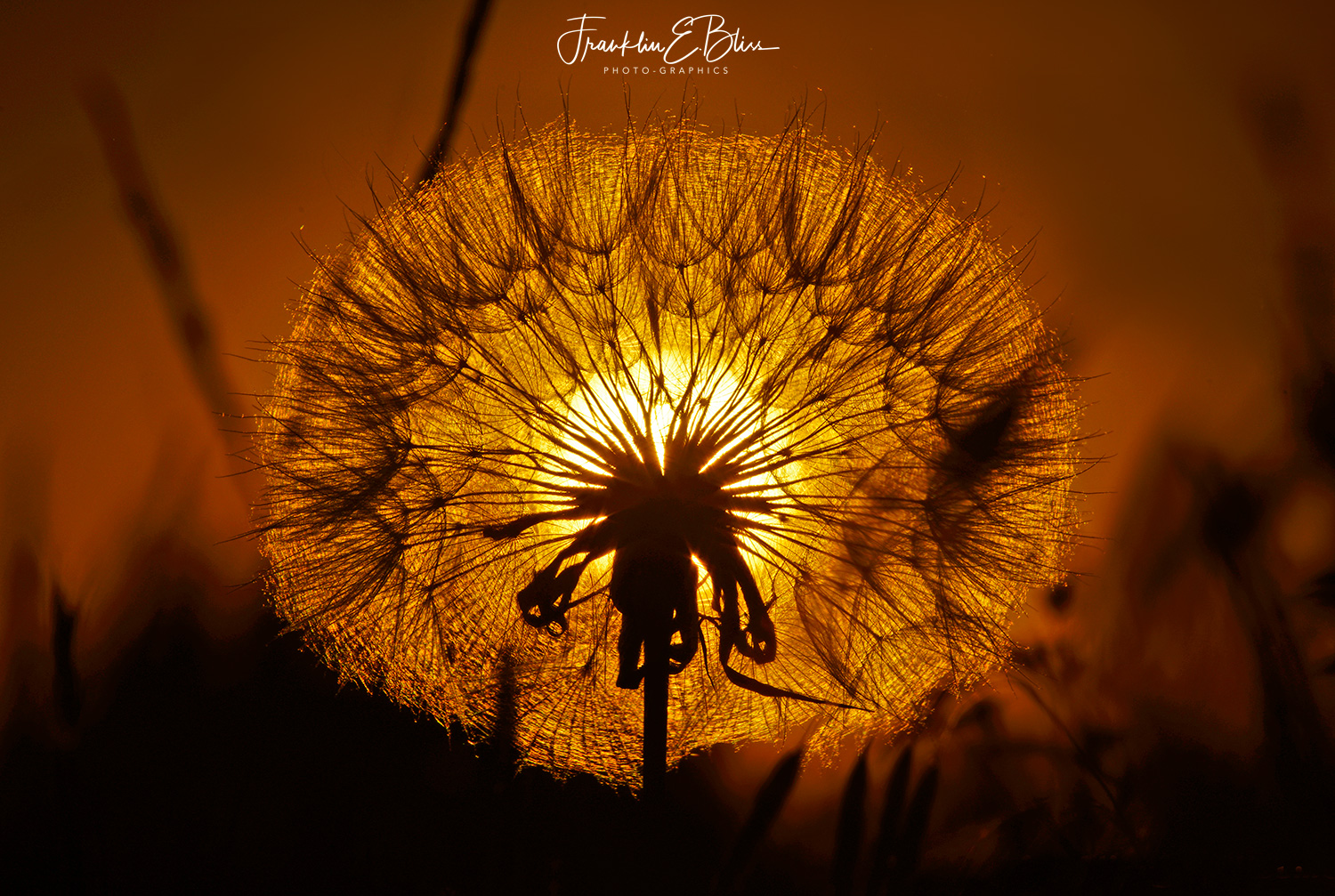 "Sunset through the Thistle Seed Globe ""Filter"""
