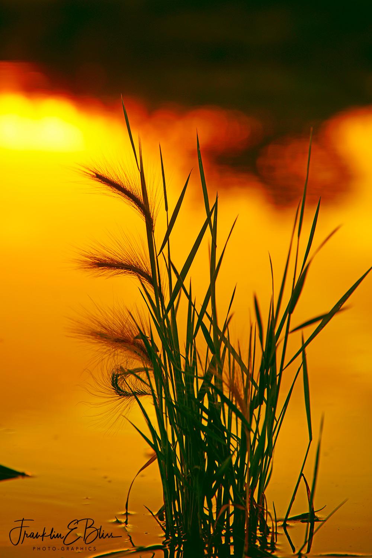 Alpenglow Off Golden Pond with a Grass Filter