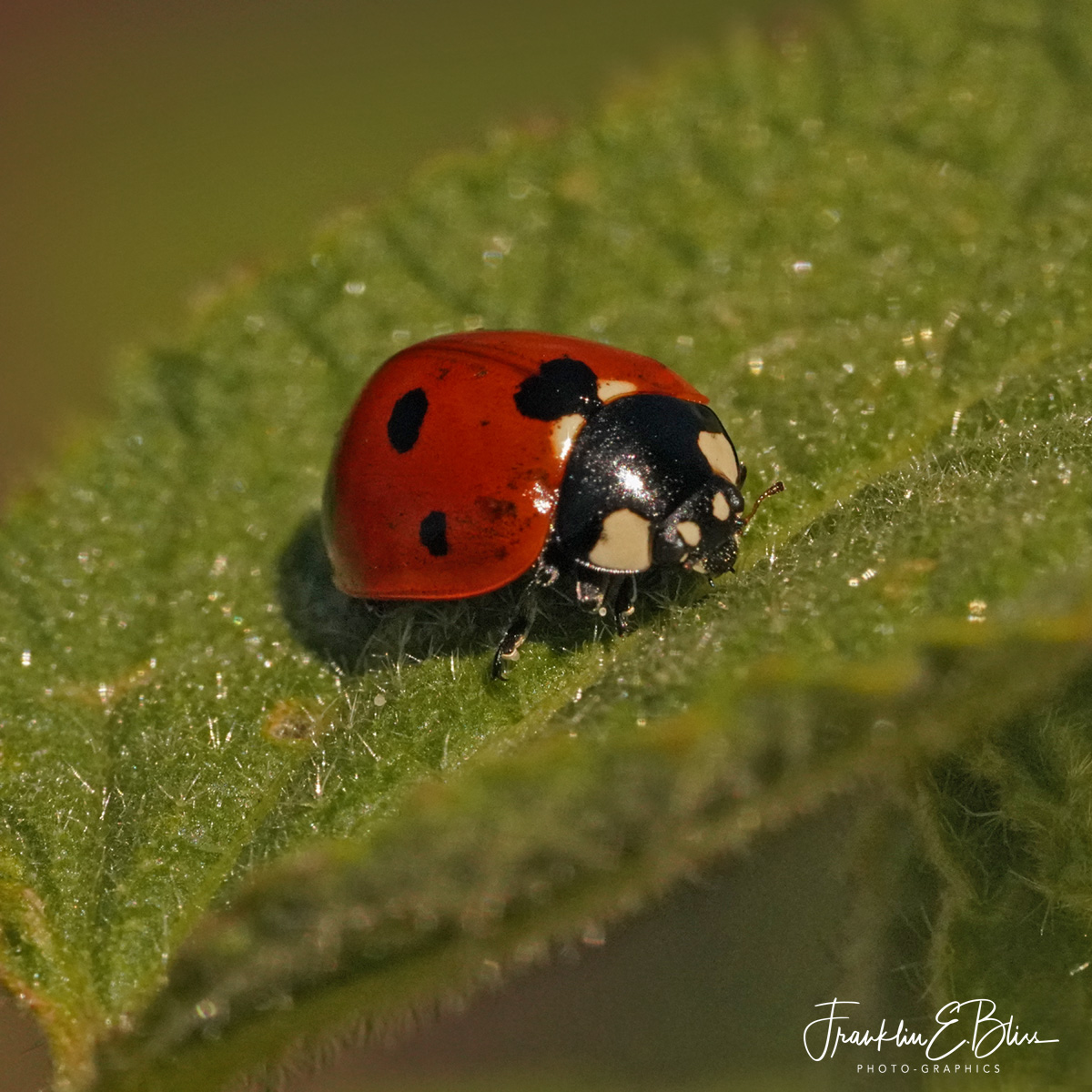 Ladybug Up Close and Personal...
