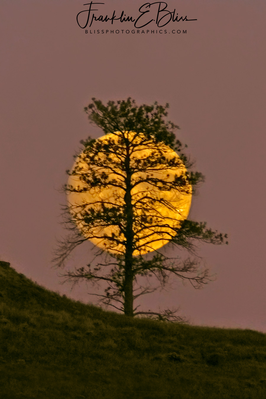 Moon Behind the Lone Tree on the Ridge