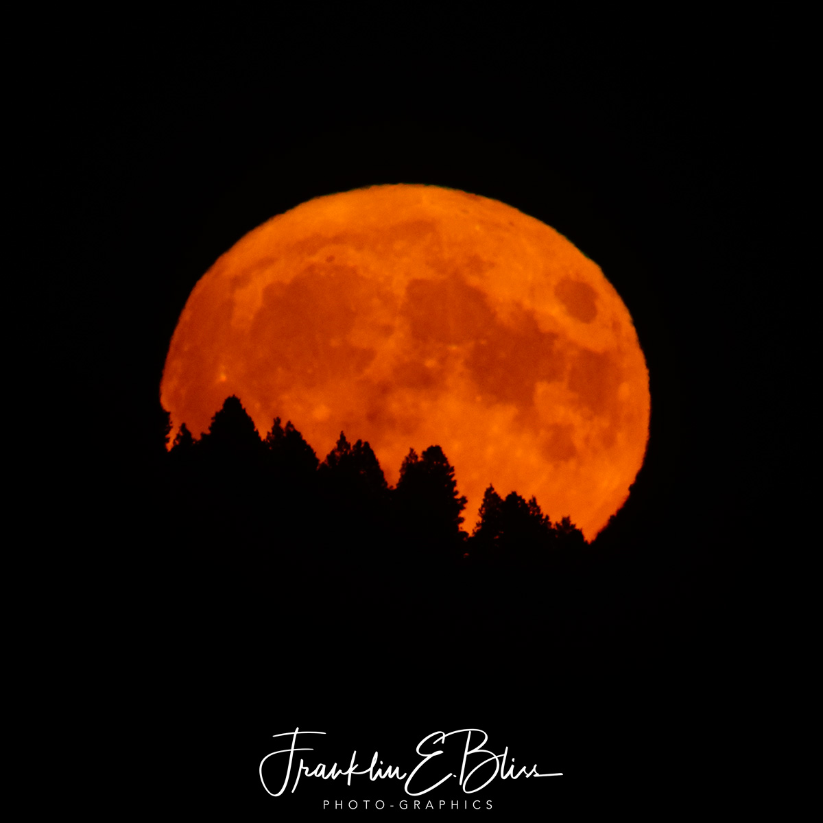 Full Harvest Moon Rising