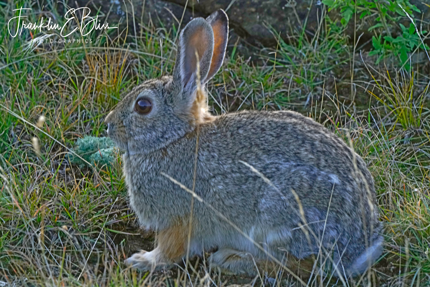 Back Country Bunny
