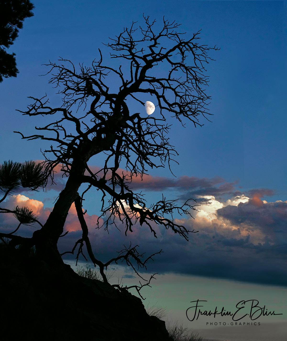 Snag Framing the Moon at Sunset