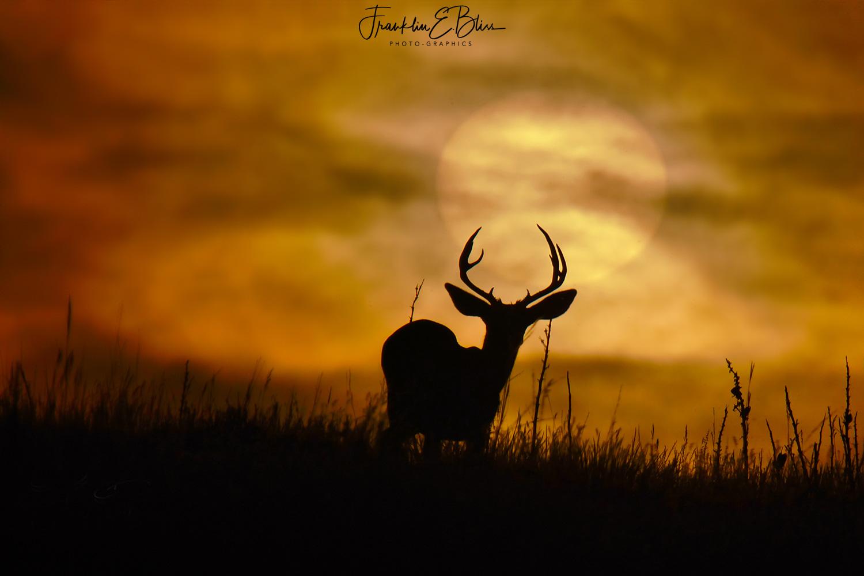 Buck Watching a Veiled Sunset