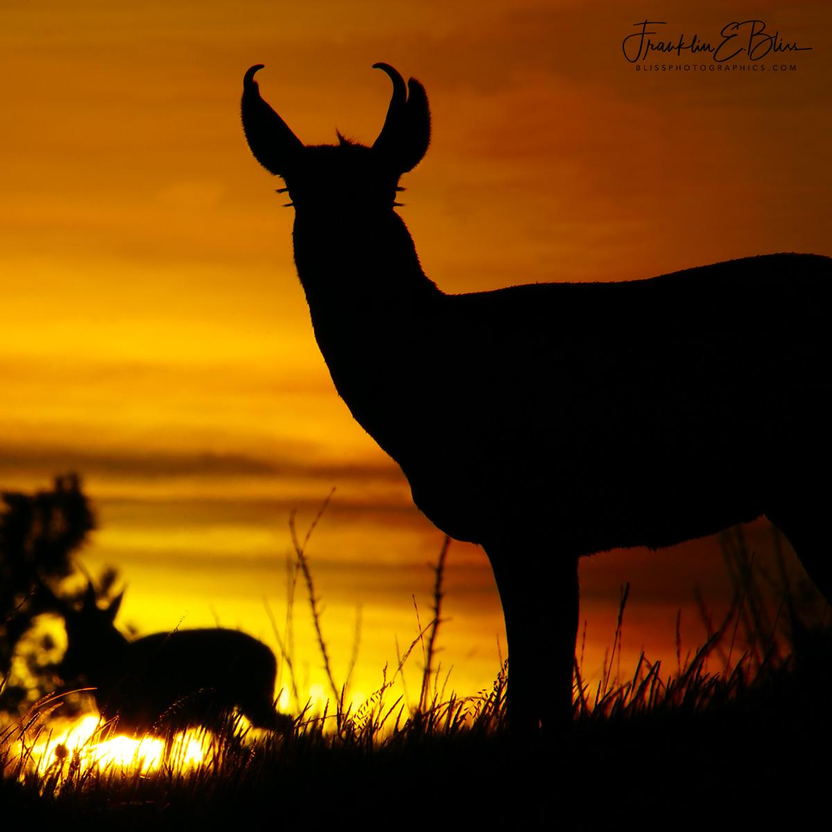 Antelope Eyelashes at Dawn