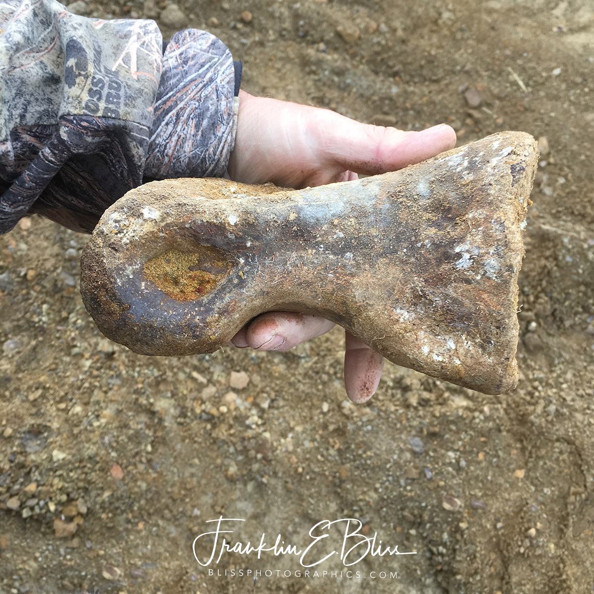 T-rex's Middle Toe Bone...just before the Killing Claw!