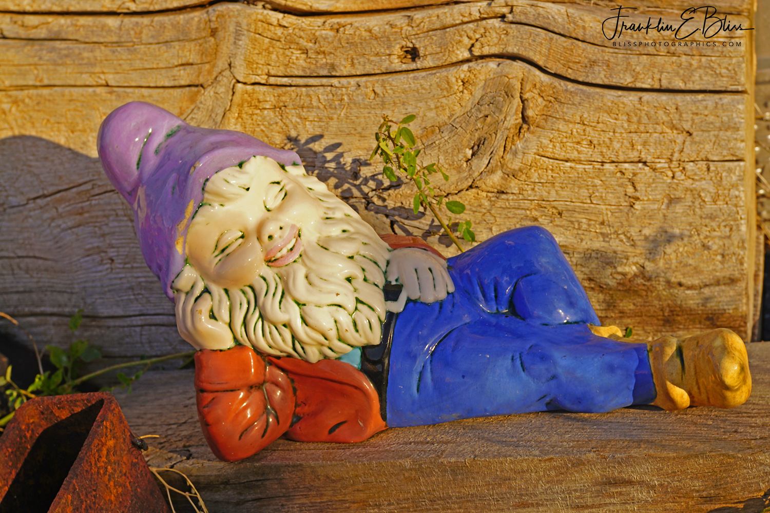 Napping Gnome Last Day of Autumn