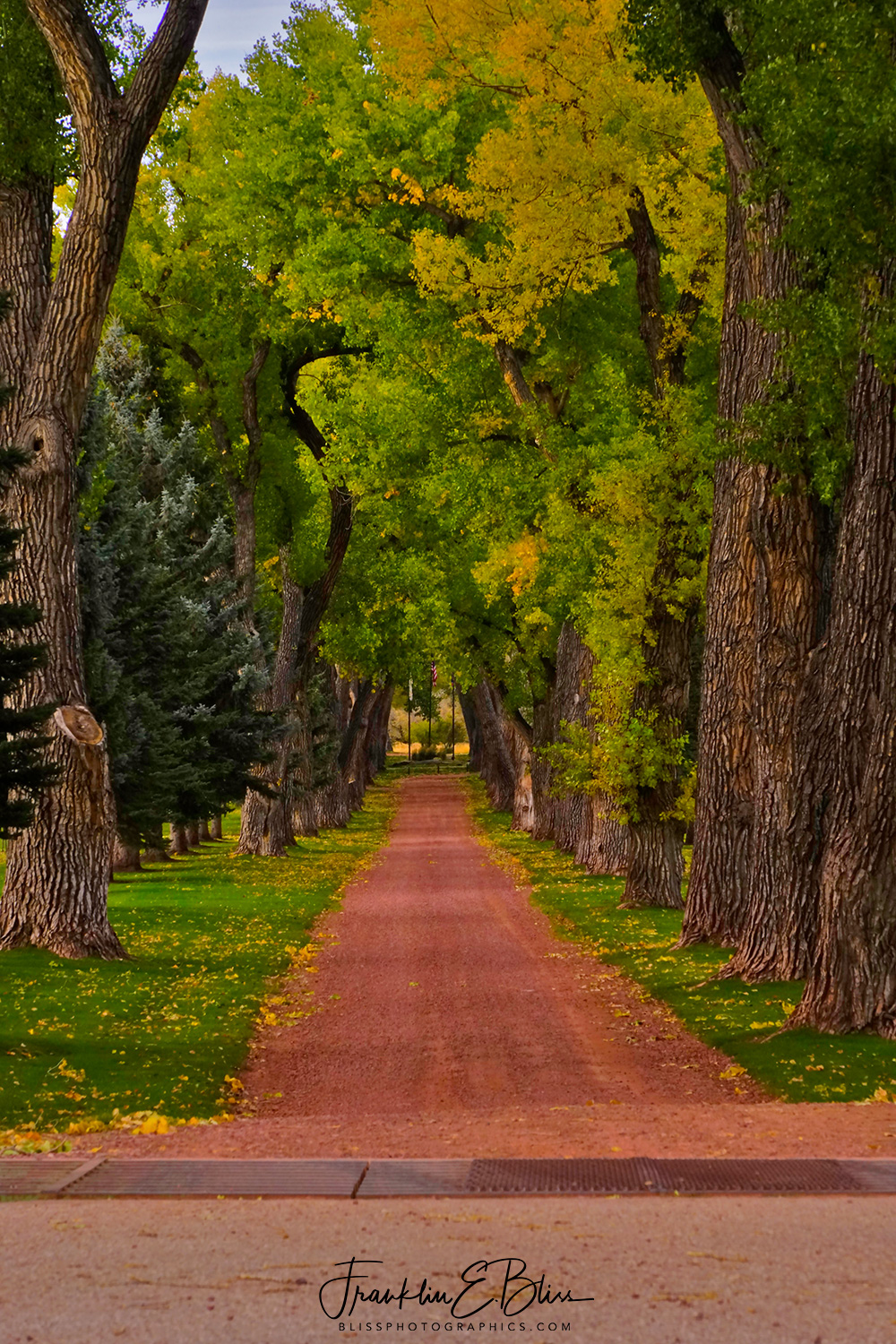 Best Driveway Ever!