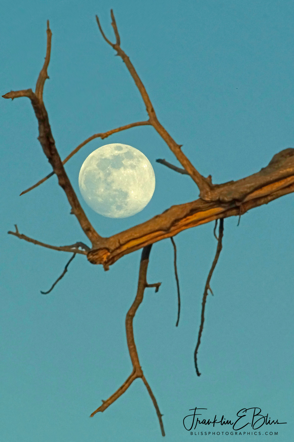 An Ent Trying to Catch the Moon