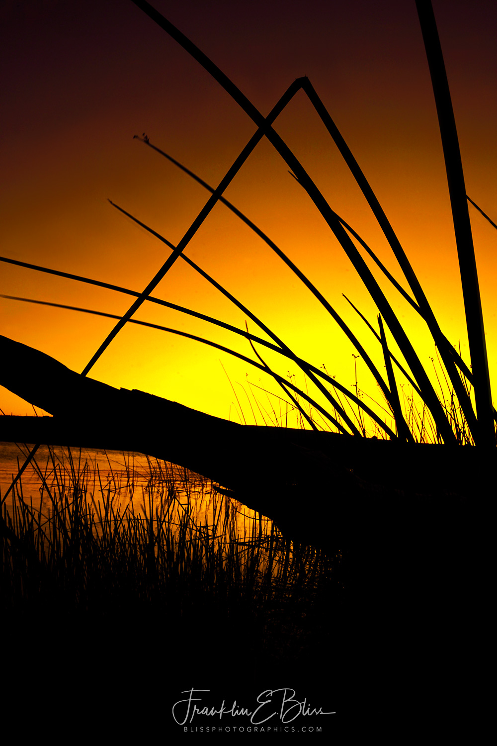 In the Reeds at Dawn