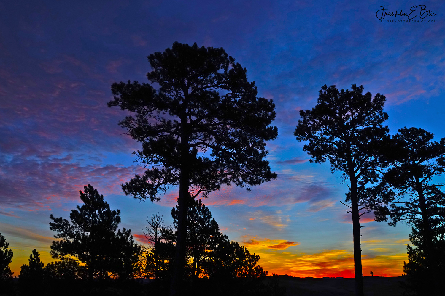 Backcountry Sunrise with the Big Jack Pines