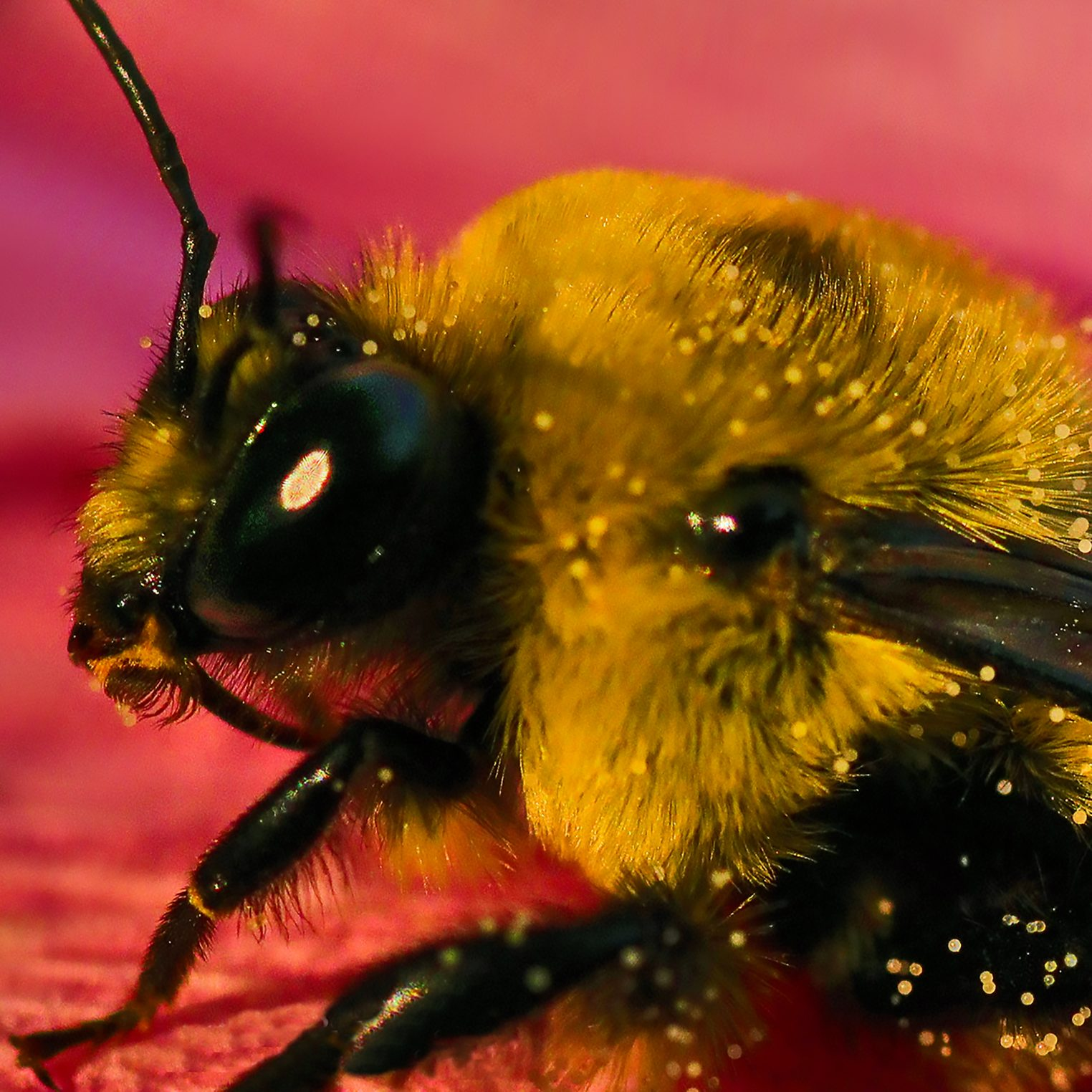 Bumble Bee Up Close