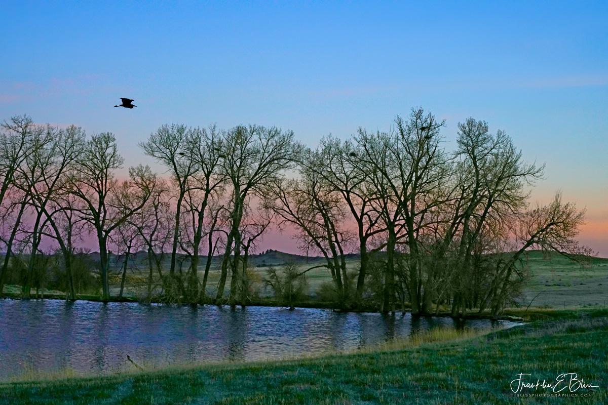 Spring Time Heron Rookery