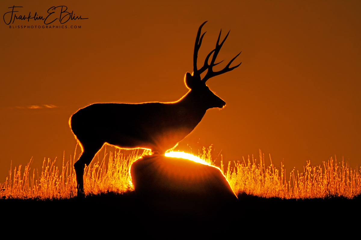 Deer Back Sun Filter Profile