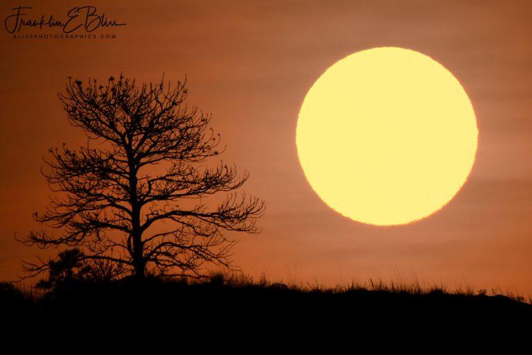 Lone Tree Ridge Sunrise 110919A