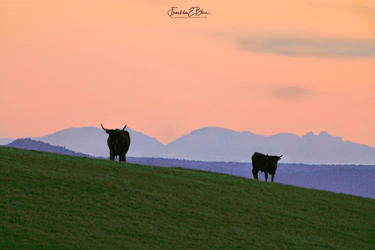 BigHorn Longhorns
