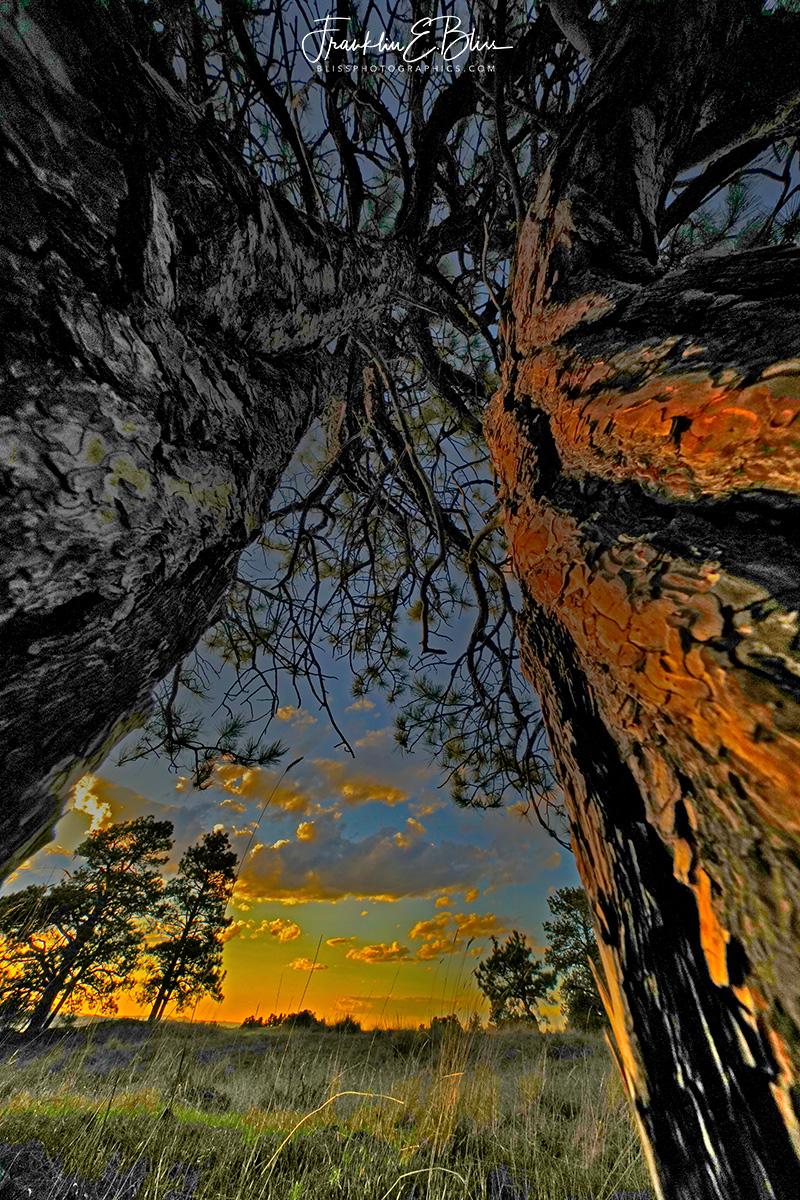 Twin Pillars at Sunset