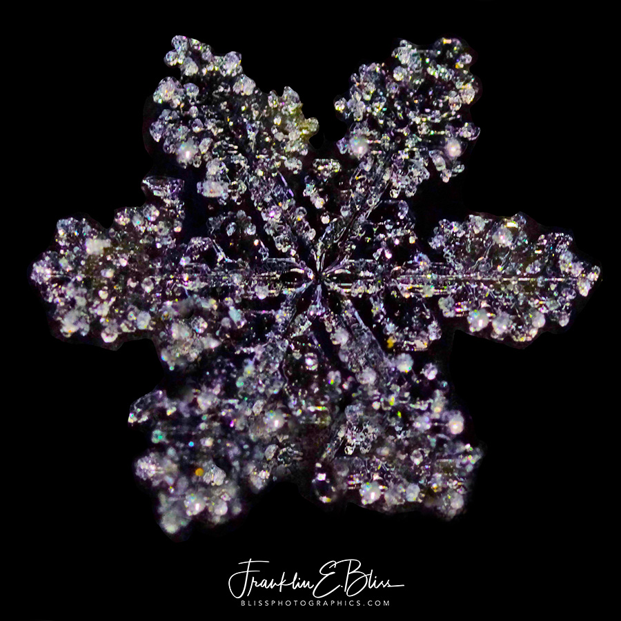 Tiffany Broach or Snowflake