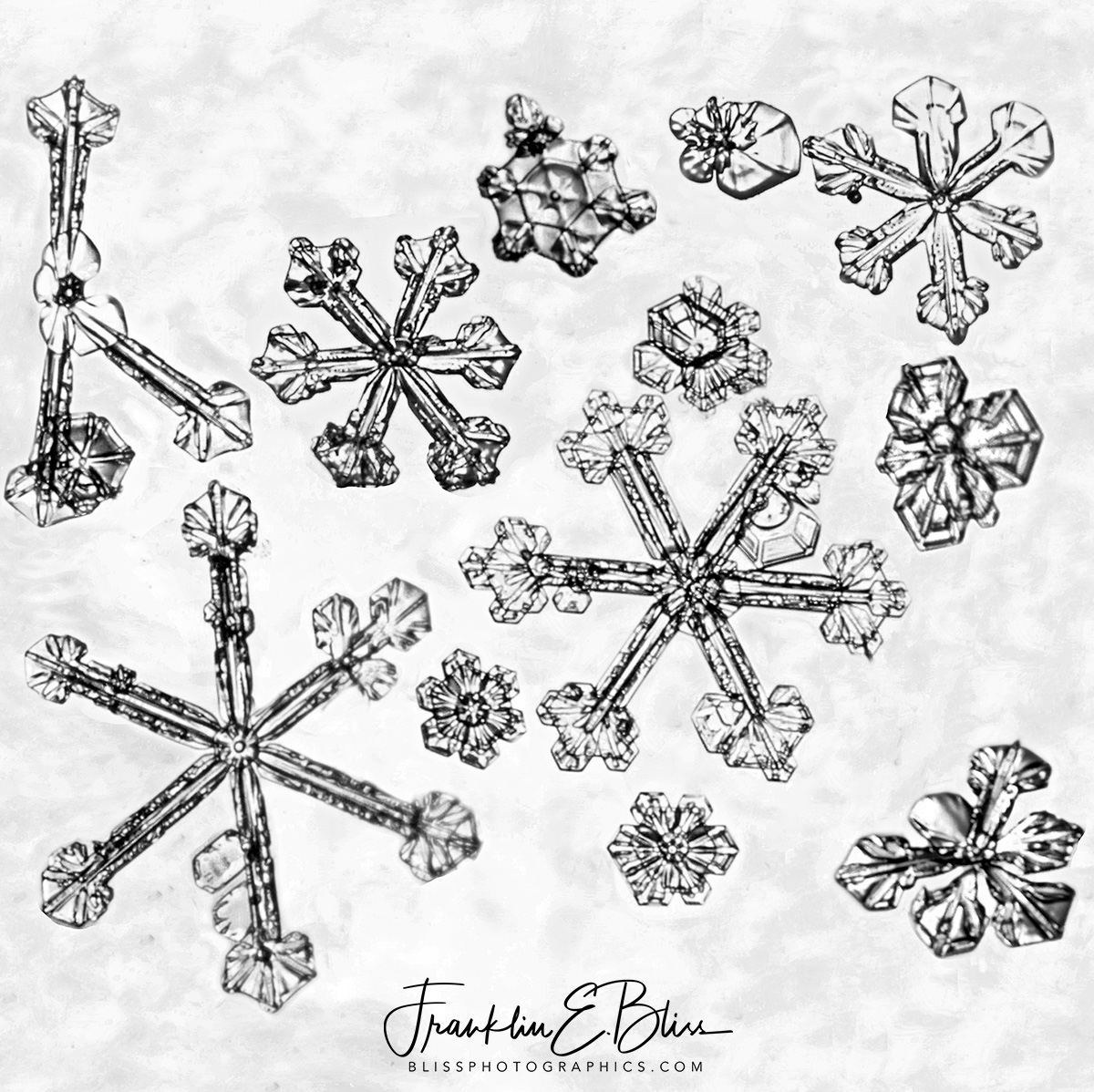 Bliss Ranch Snowflake Compilation