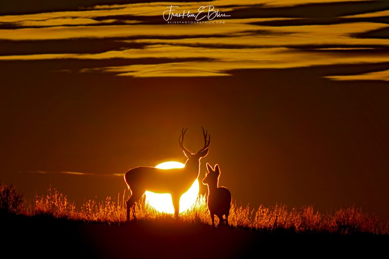 Deer Watching the Sunset 111719C