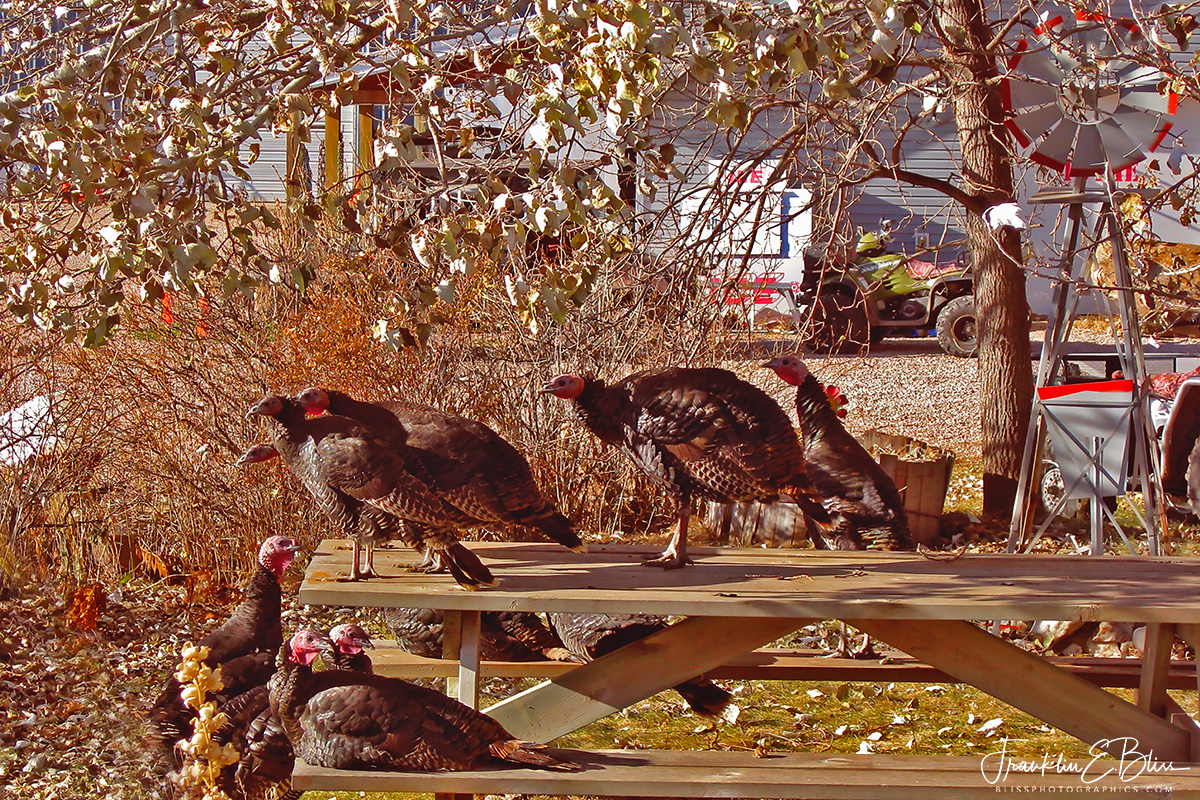 Guests for Thanksgiving Picnic Dinner