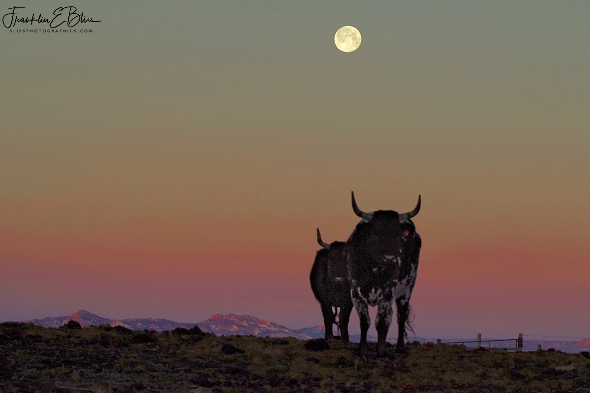 LongHorn Moon Mountain Perspective