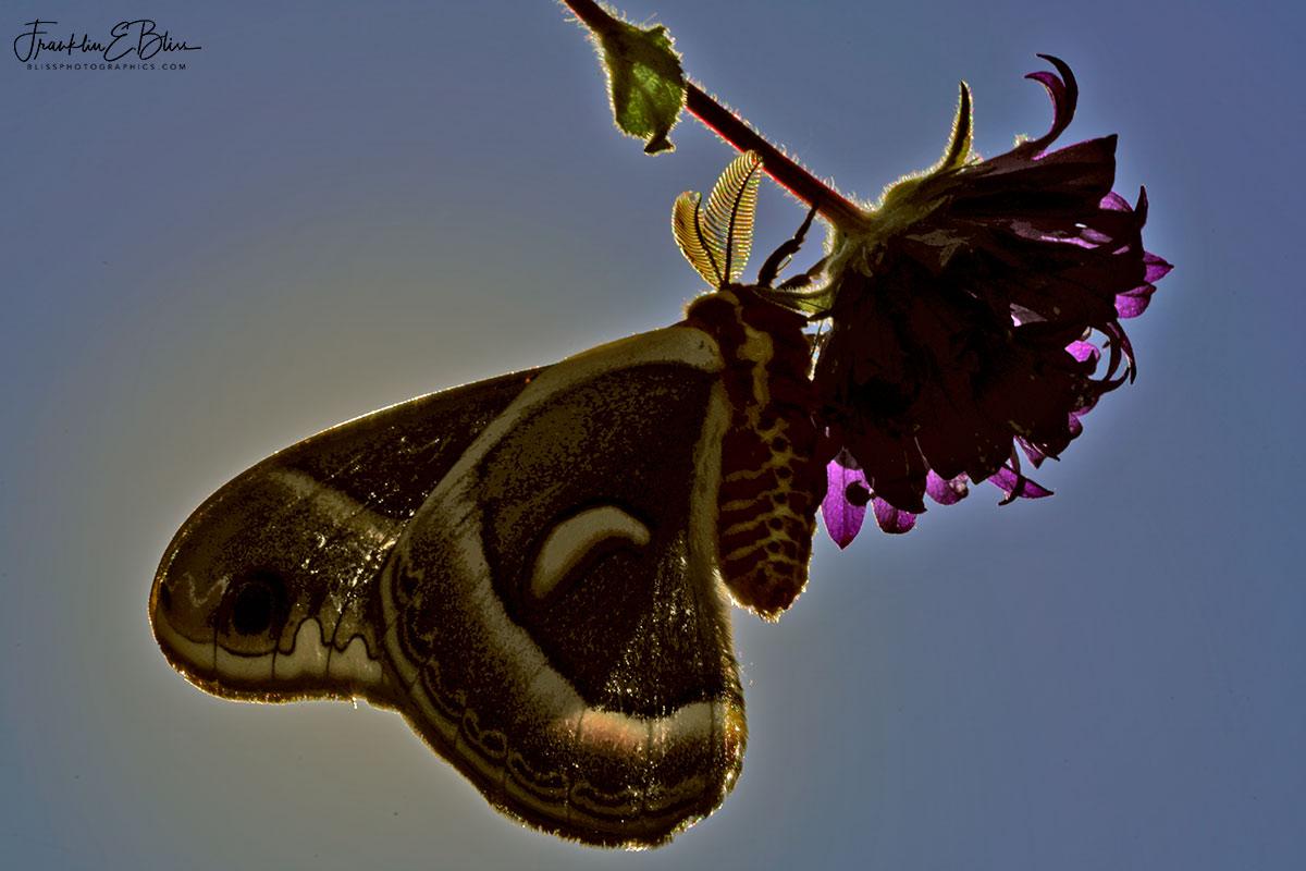 Glover Moth Sun Filter