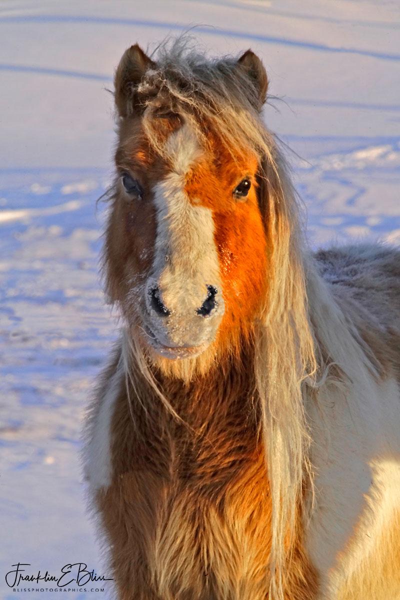 Pony Up It's Cold