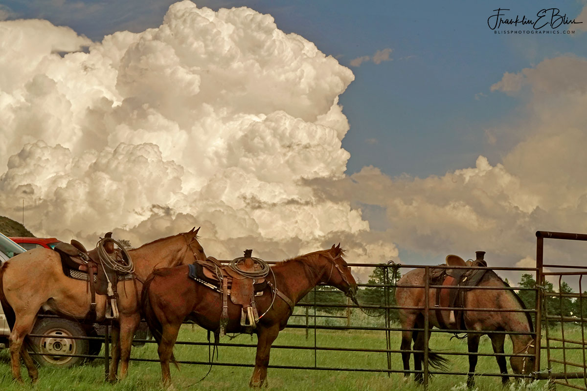 Round Up Stormy Afternoon