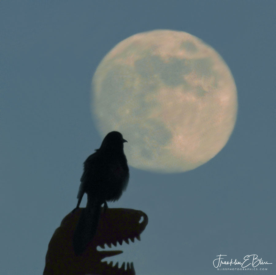 Dinosaurs and Birds Moon Watching