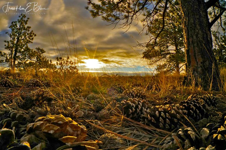 Perspective: Pine Cone Sunset  120519S