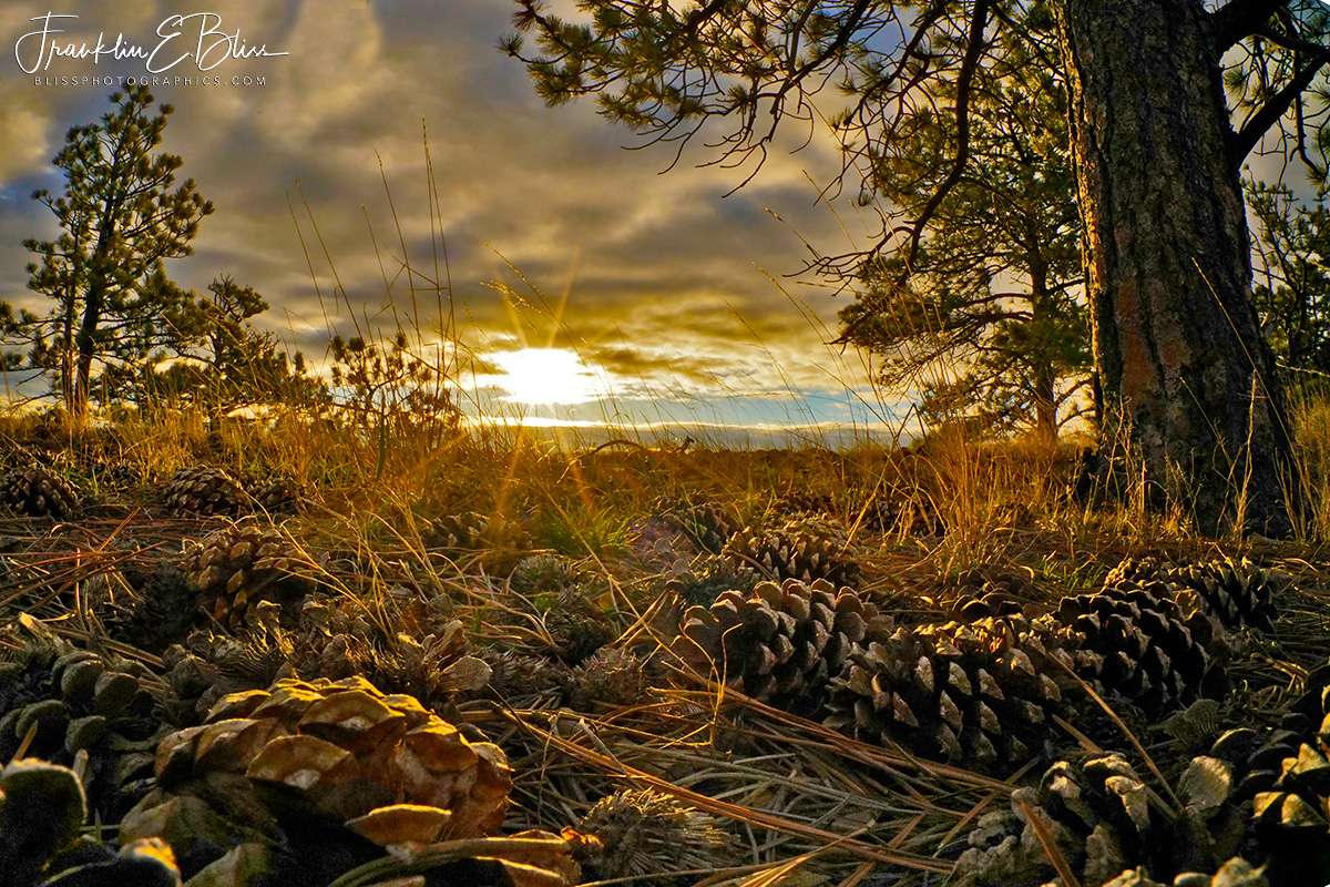 Perspective: Pine Cone Sunset
