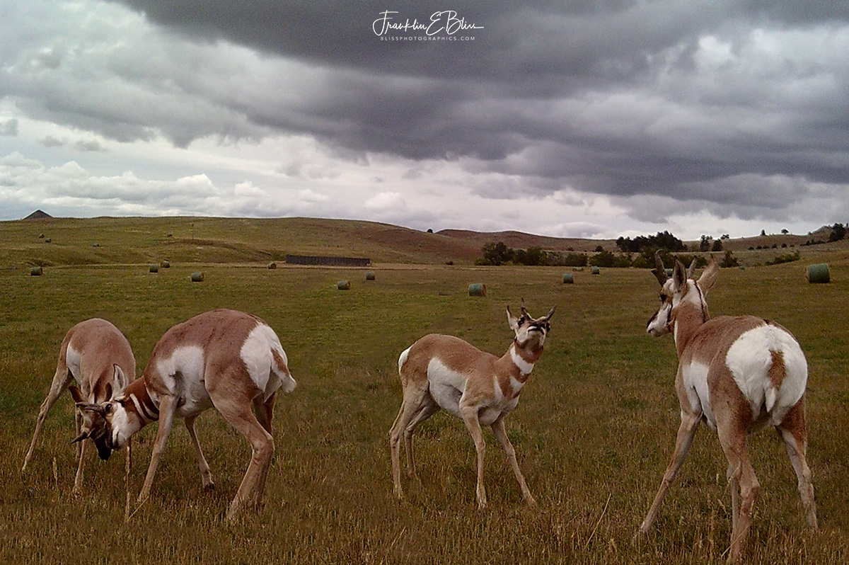 Pronghorn Rut Training Dojo