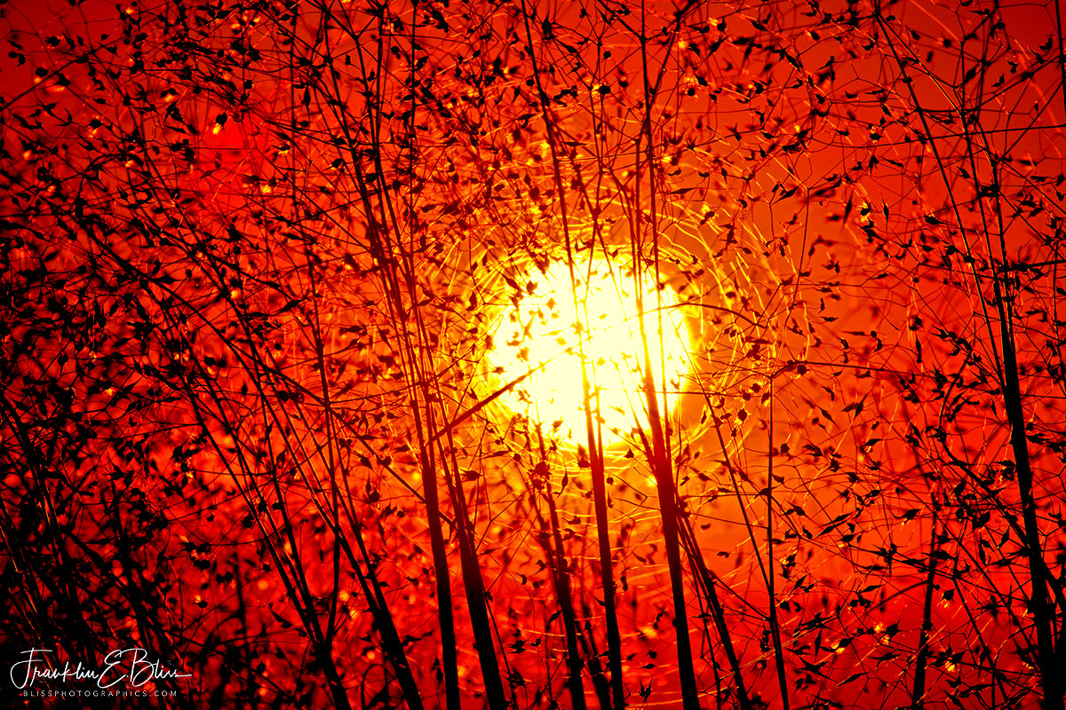 Sunset Cellulose Lens Filter