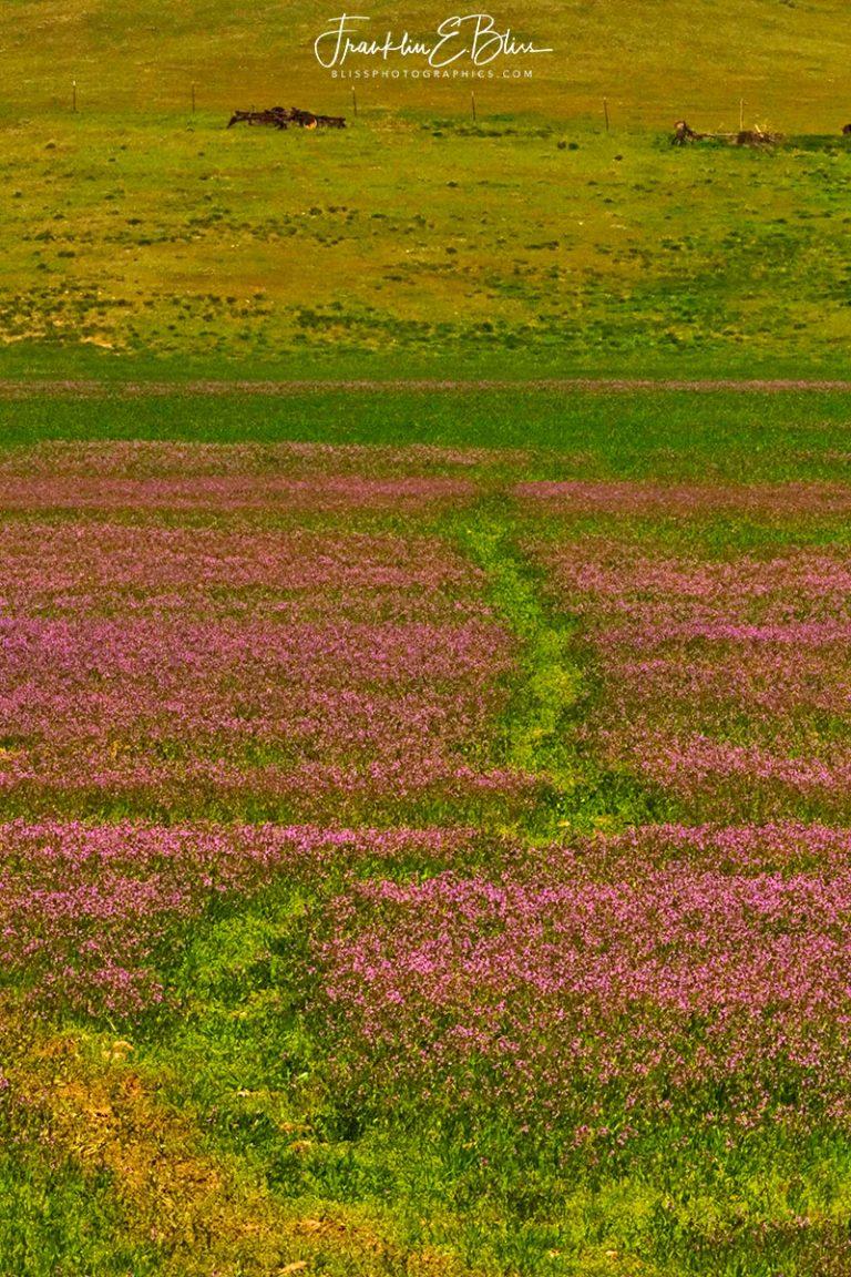 Alfalfa Bloom Game Trail 011320R