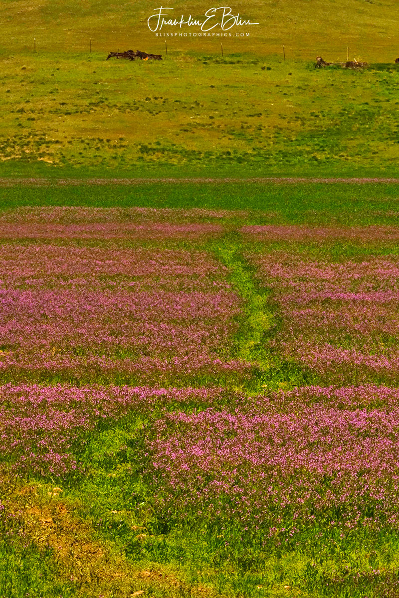 Alfalfa Bloom Game Trail