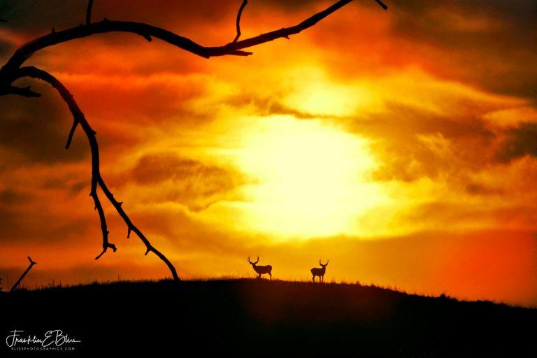 Sunset Over Deer Ridge 011120D