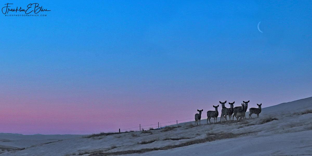 Crescent Moon Over Deer