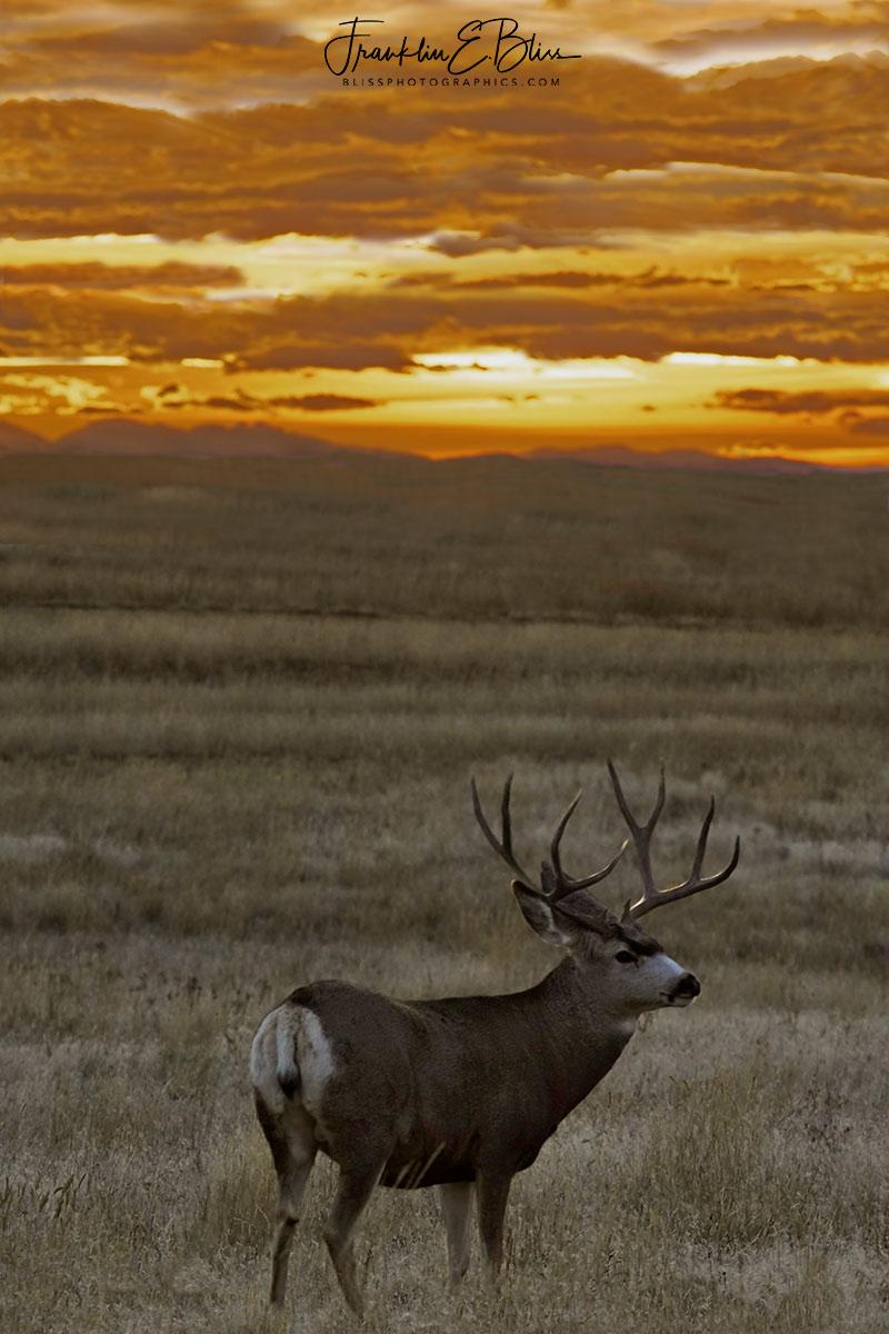Big Horns Big Antlers