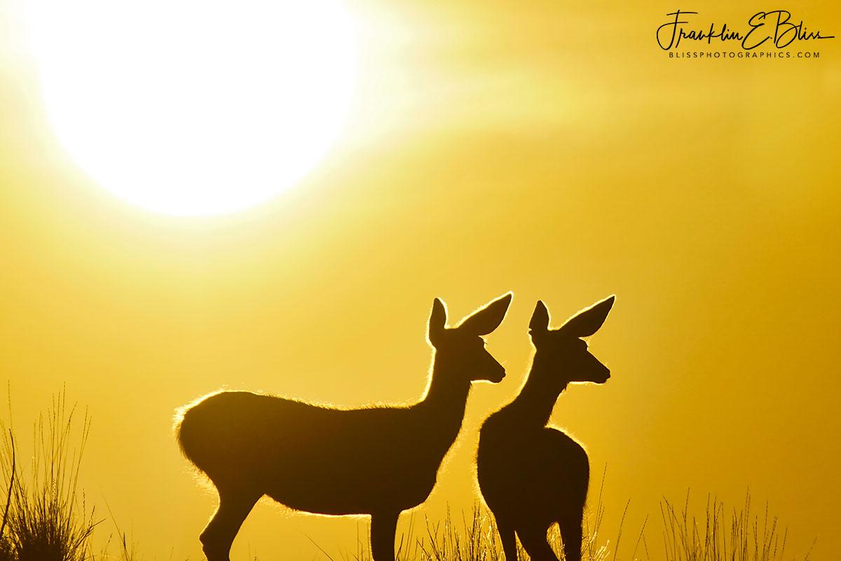 Sunshine over Their Shoulder