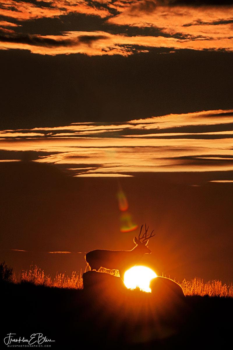 Deer Herd Sun Filter