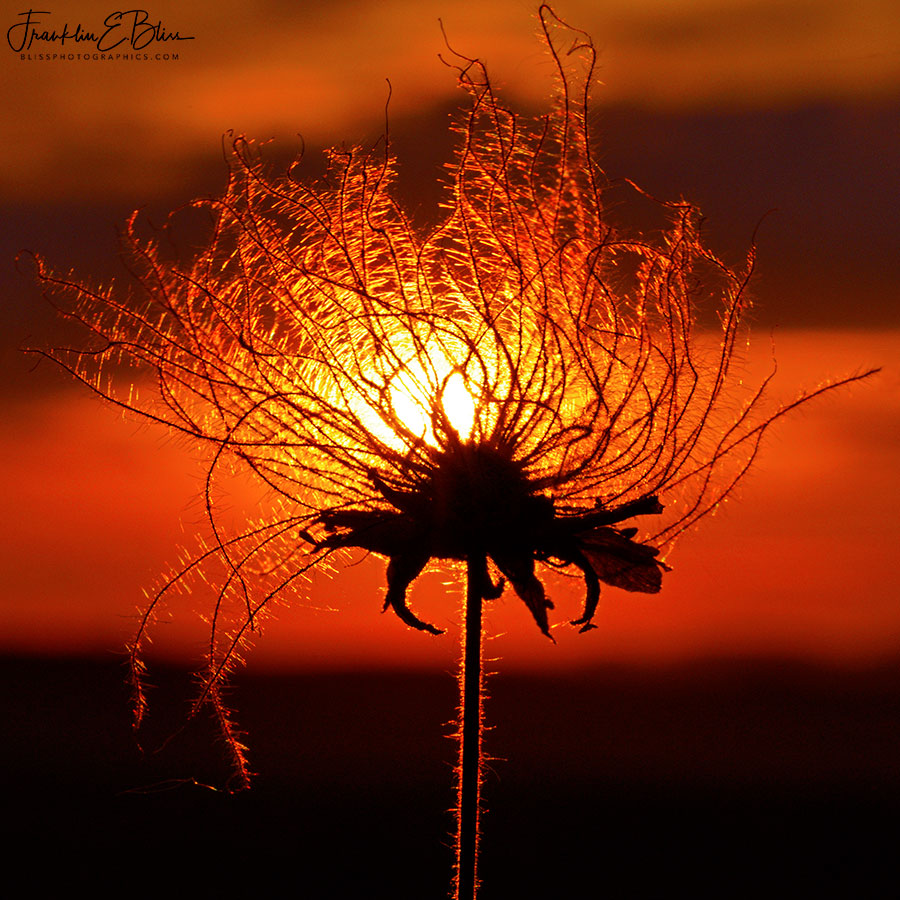 Prairie Smoke Sun Filter