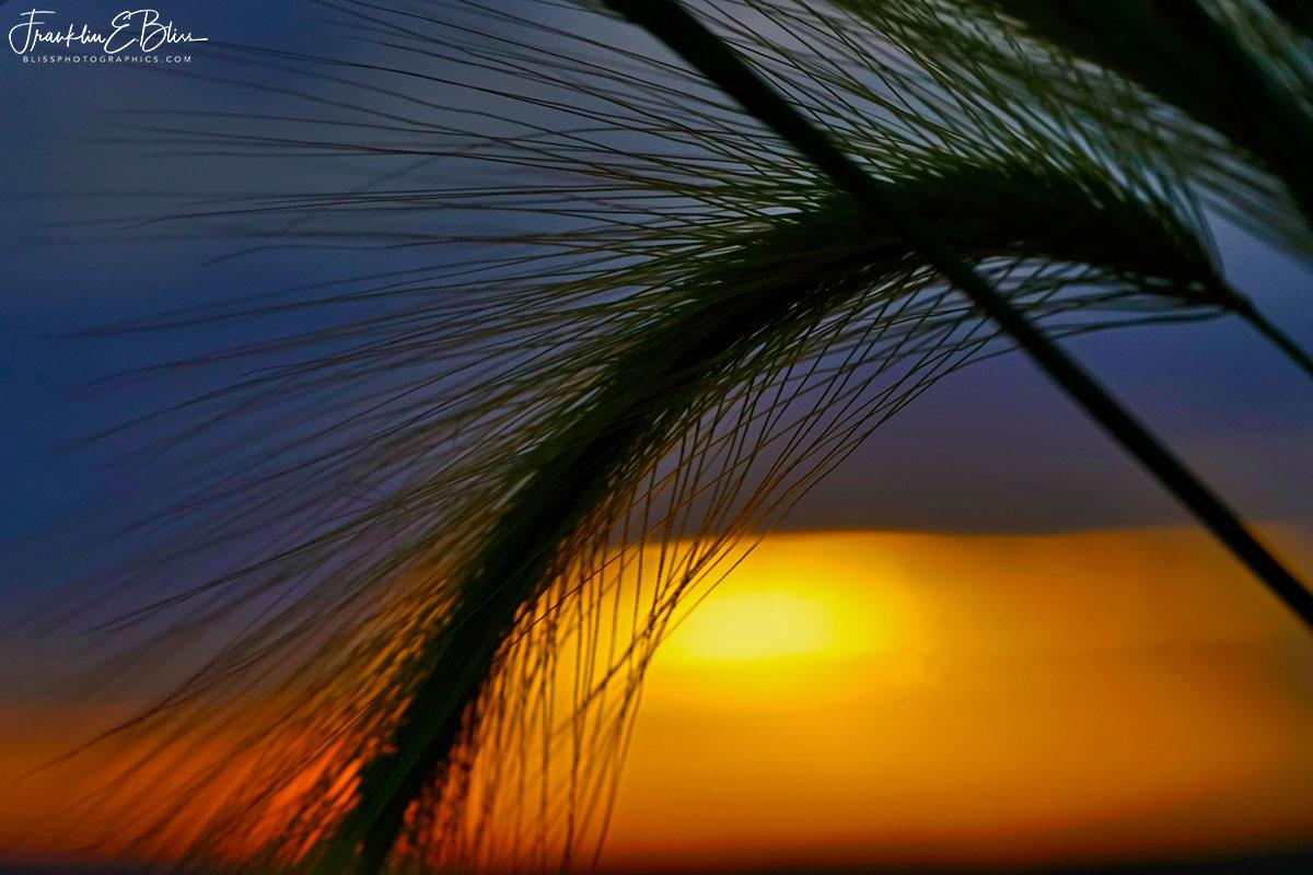 Grass Sunlight Filter