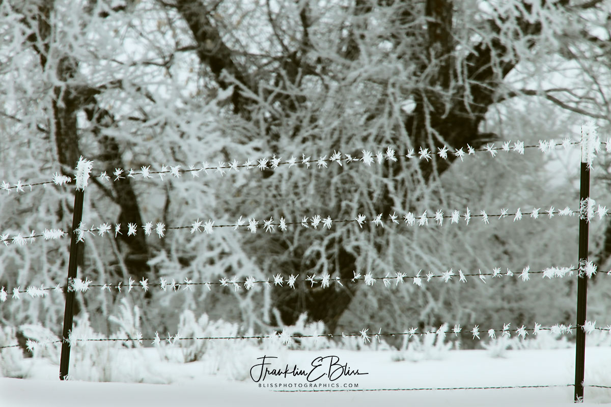 Barbed Wire Hoar Frosted