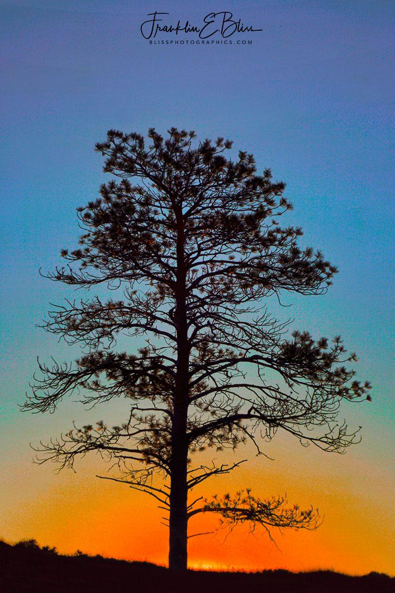 Lone Tree Sky Gradient