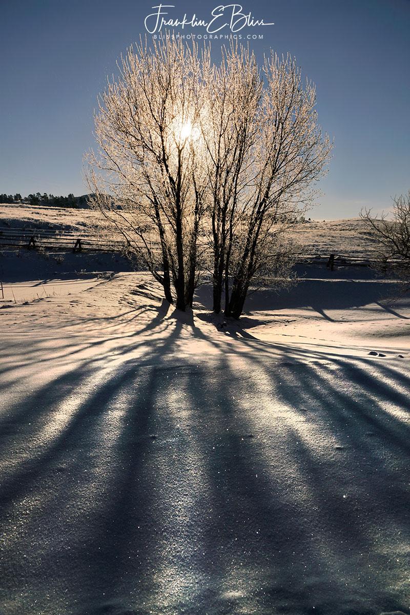 Shadows Divergent Snowy Sunrise